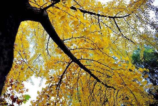 描写秋天景色的诗句 描写秋天诗句大全