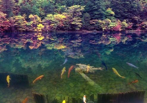 水边风景与鱼群合成 梦幻电子相册设计