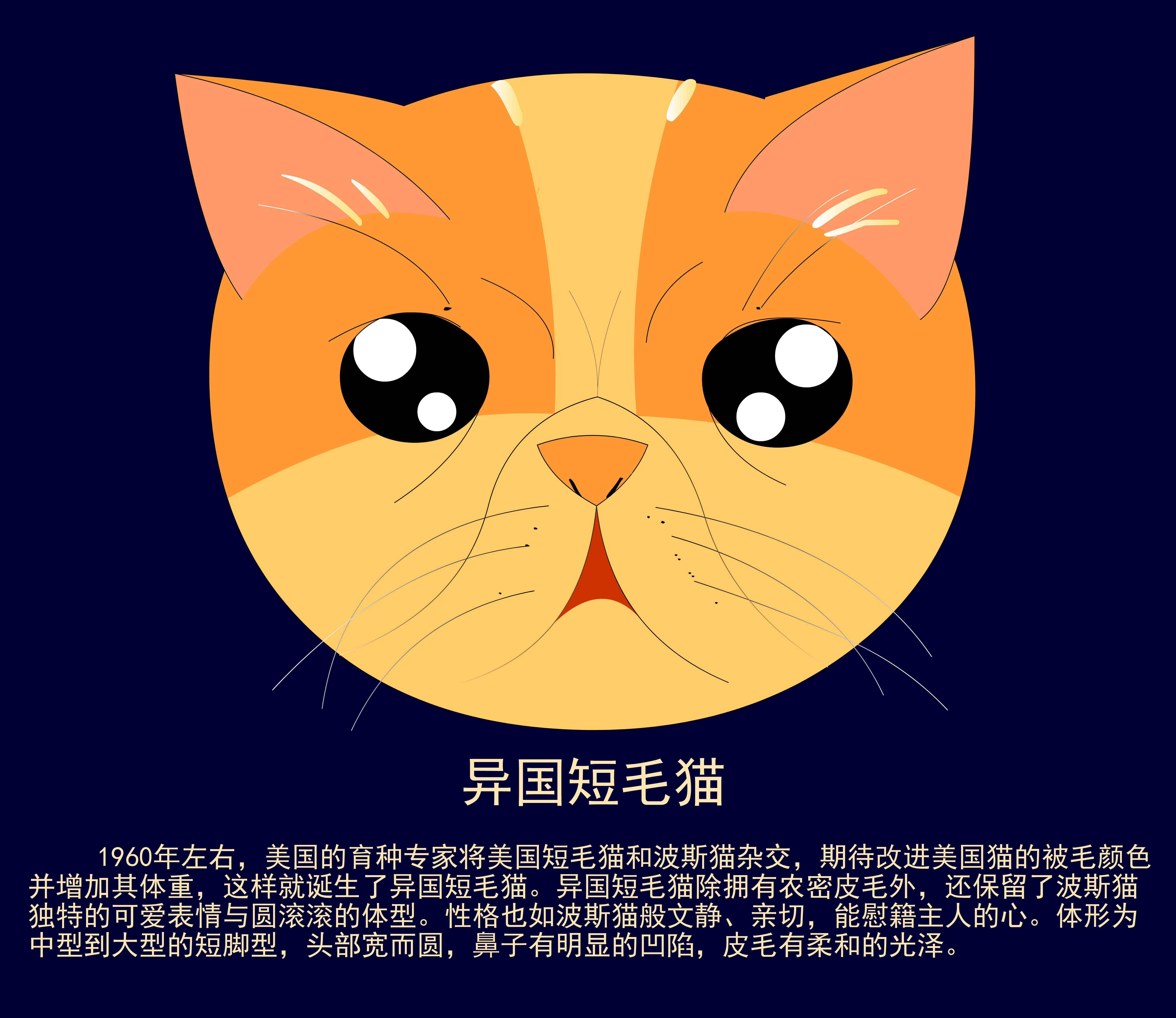 需要可爱的猫头正面照片