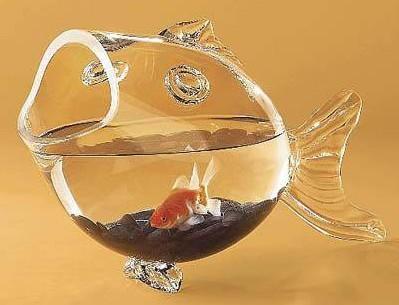家庭养鱼风水 养鱼风水学
