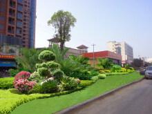 某城市公共绿地提升