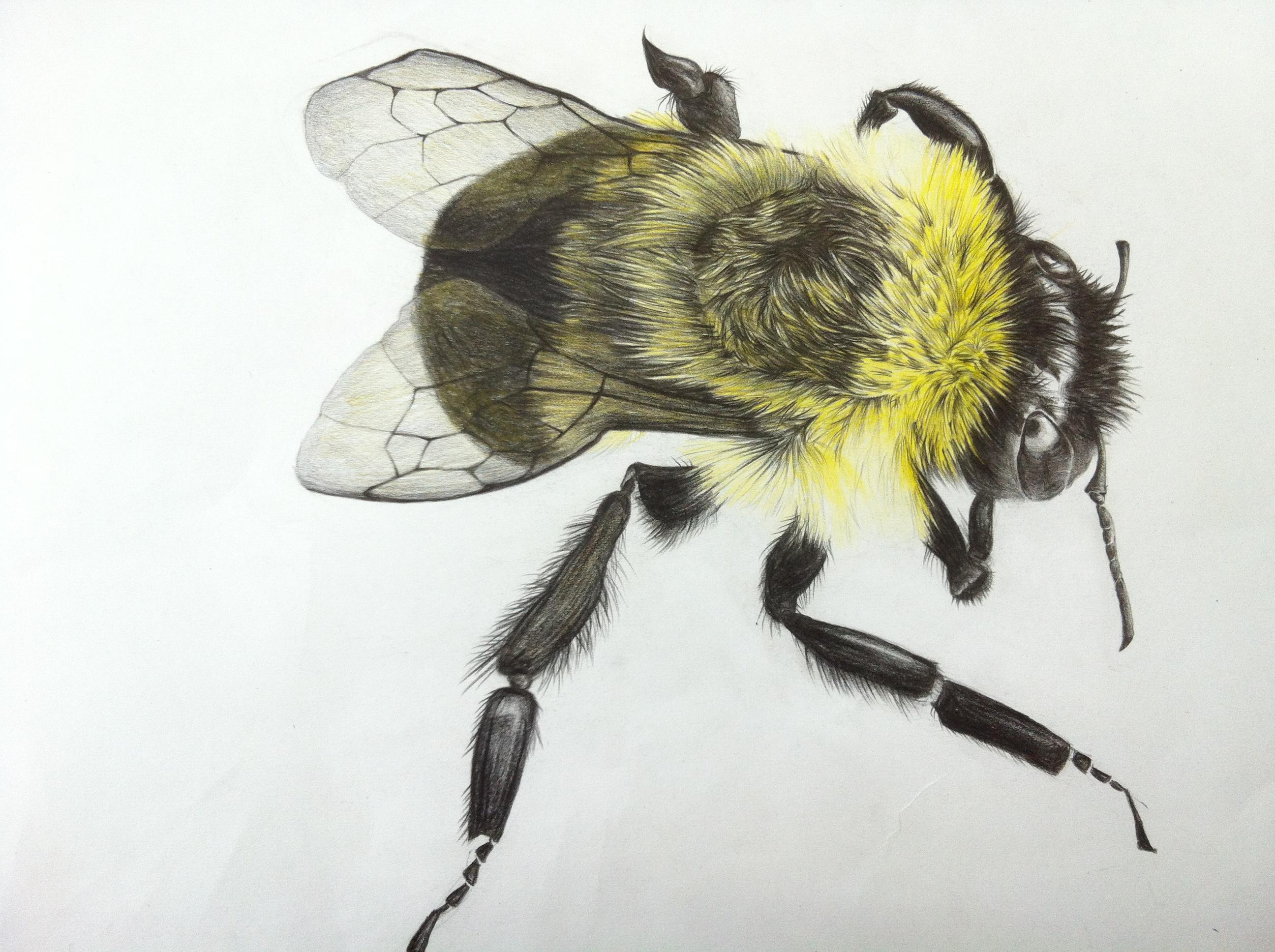 写实蜜蜂_至善设计案例展示