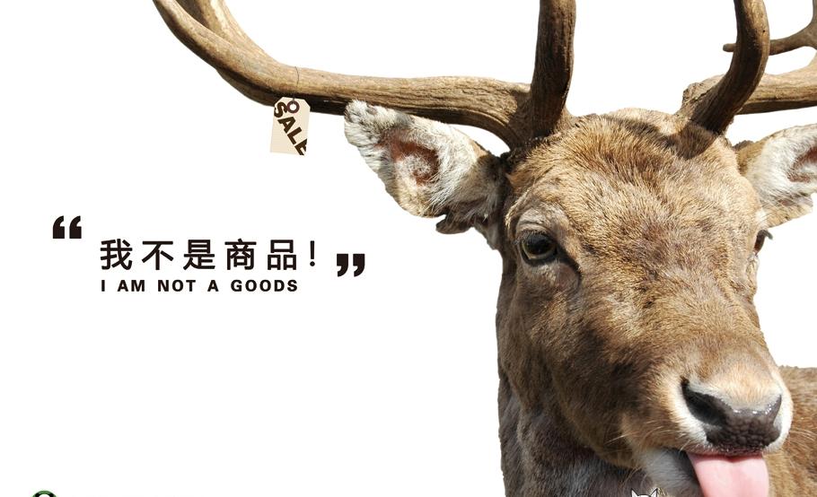 所以现在到处有了保护动物的宣传语
