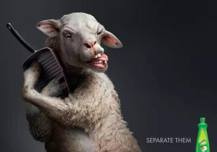 搞笑的动物照片合成欣赏