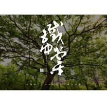 【优行创意设计】铁仲棠logo设计 瓶贴 外包装设计 品牌形象系列设计  提高品牌辨识度 树立品牌形象