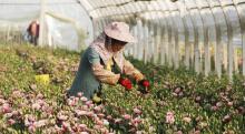 鲜花种植基地智慧灌溉