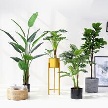 盆栽植物无线端首页