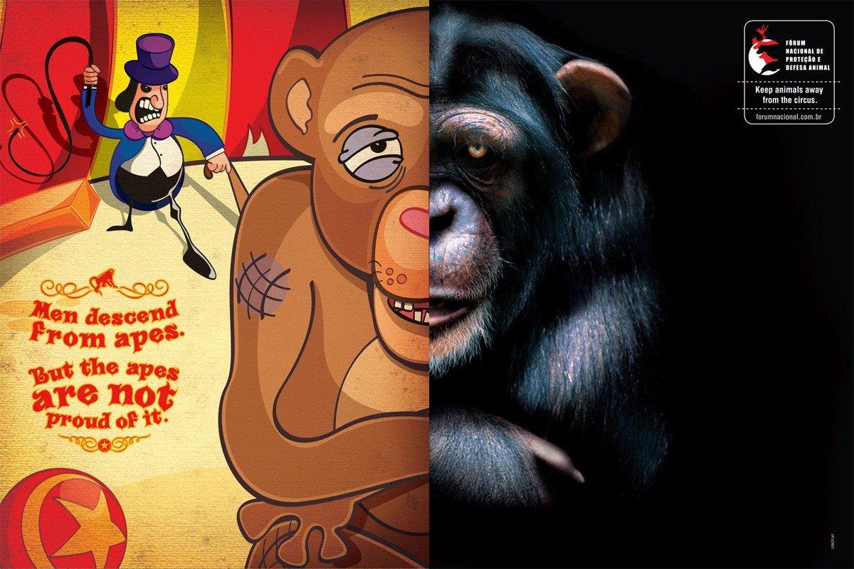 保护动物组织公益广告:动物保护,人人做起
