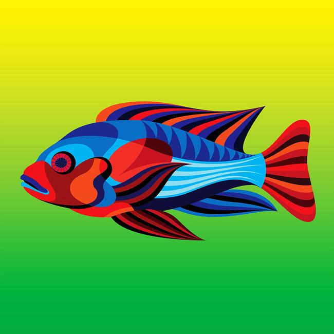 Matt W Moore多彩的濒危热带鱼插画设计欣赏