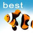 酷鱼包装平面广告