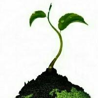 绿芽精致工作室