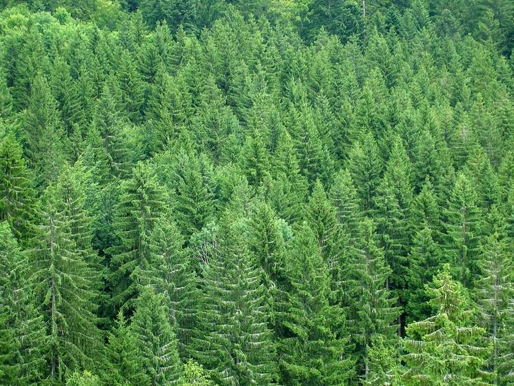 我市今年将完成秋冬季植树10000亩