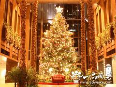 餐厅圣诞节活动策划方案 圣诞节餐厅活动策划书