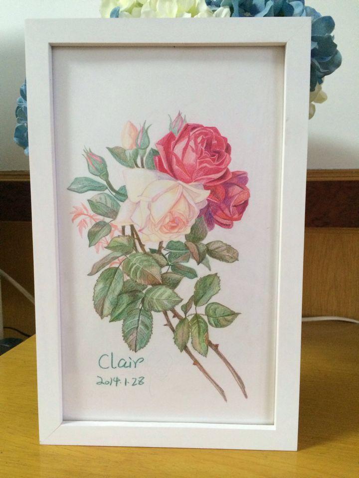 彩铅手绘月季花