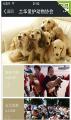 土华爱护动物协会