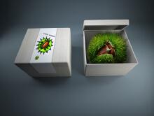 栗蓬包装设计案例