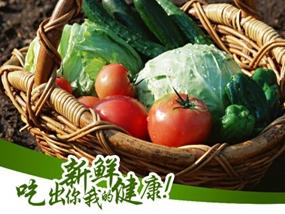 蔬菜生产基地DM单、展板及易拉宝设计