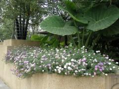 园林花境如何设计,园林花境设计案例