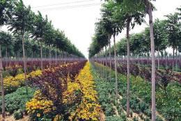 美丽中国生态城:苗木产业基地的旅游策划方案