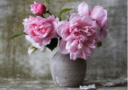 有时祝福的话语不需要多么的华丽只需要温馨就好