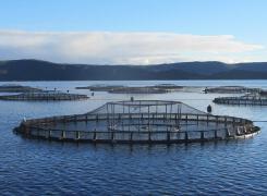 渔场养殖场平面图片欣赏
