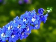 50种花境设计常用植物