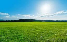 保护草坪标语,爱护草坪人人有责