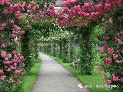 园林景观中的花架设计