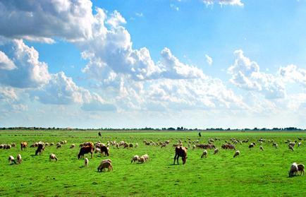 畜牧业养殖app软件开发