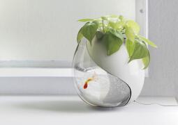 花盆里的鱼缸