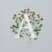 26个英文字母与花的结合设计